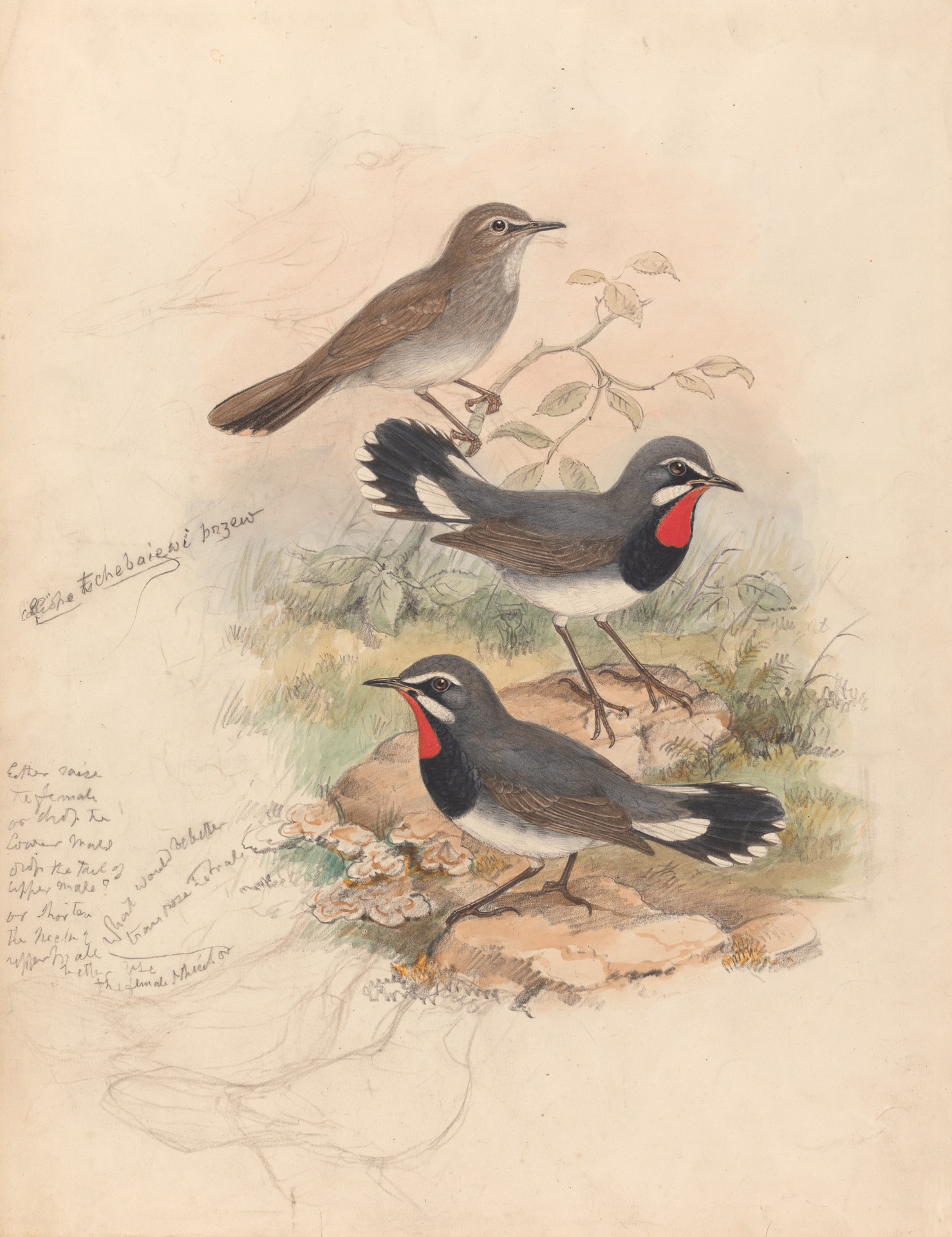 John Gould's quote #2