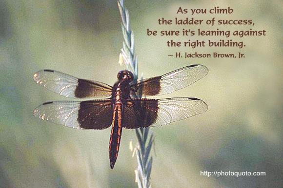 Ladder quote #7