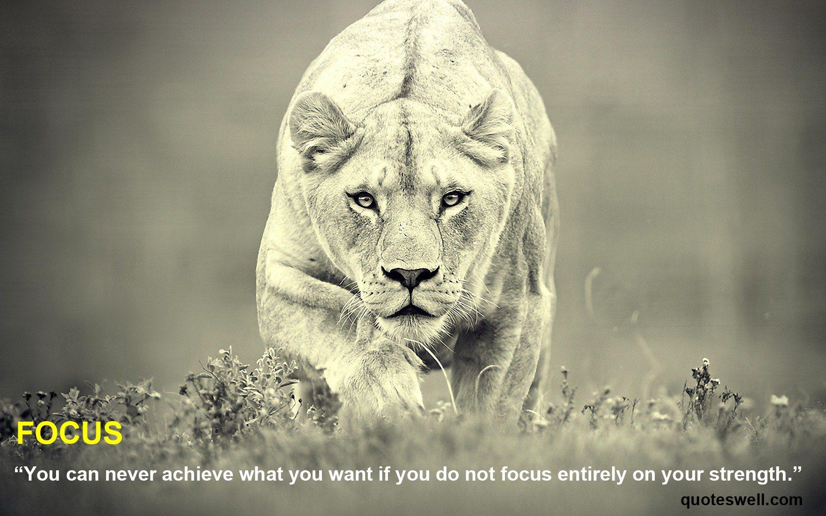 Lion quote #2