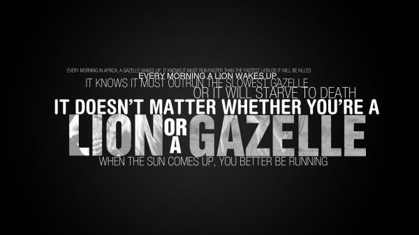 Lion quote #7