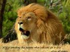 Lion quote #8