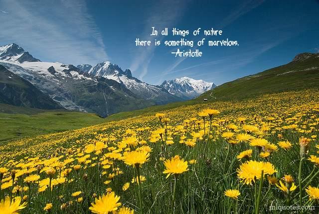 Marvelous quote #4