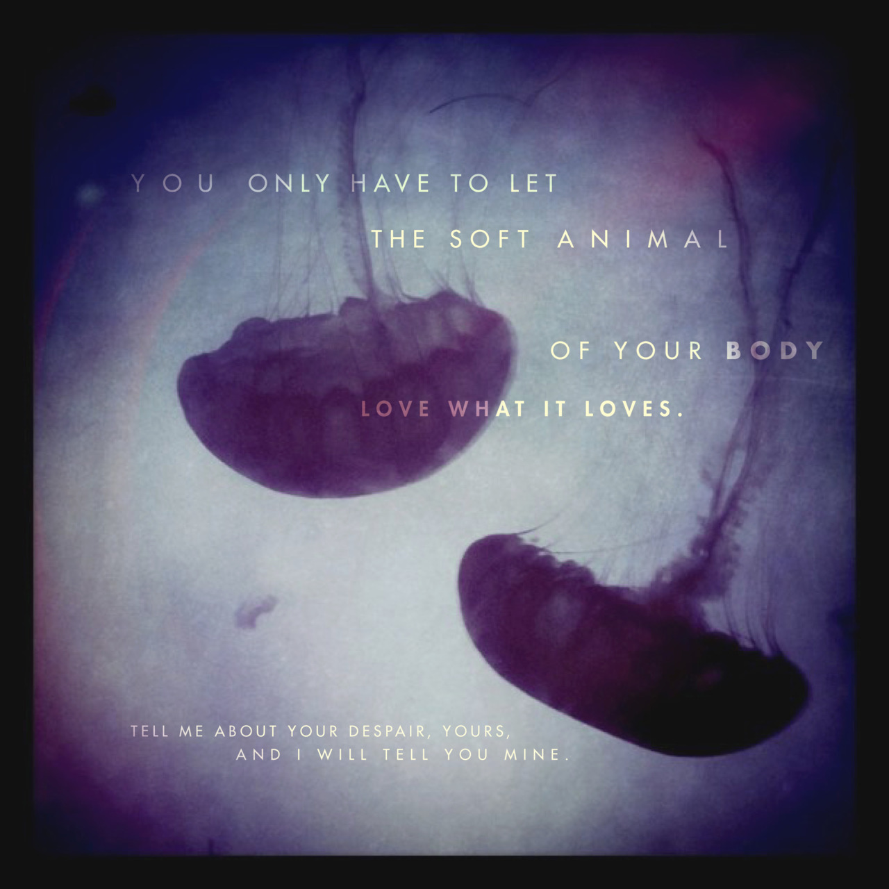 Mary Oliver's quote #4