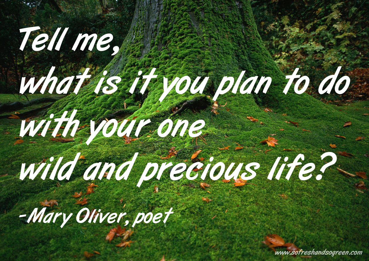 Mary Oliver's quote #7