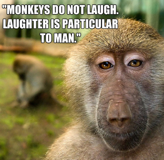 Monkeys quote #2