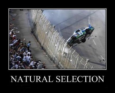 Natural Selection Theory Explained