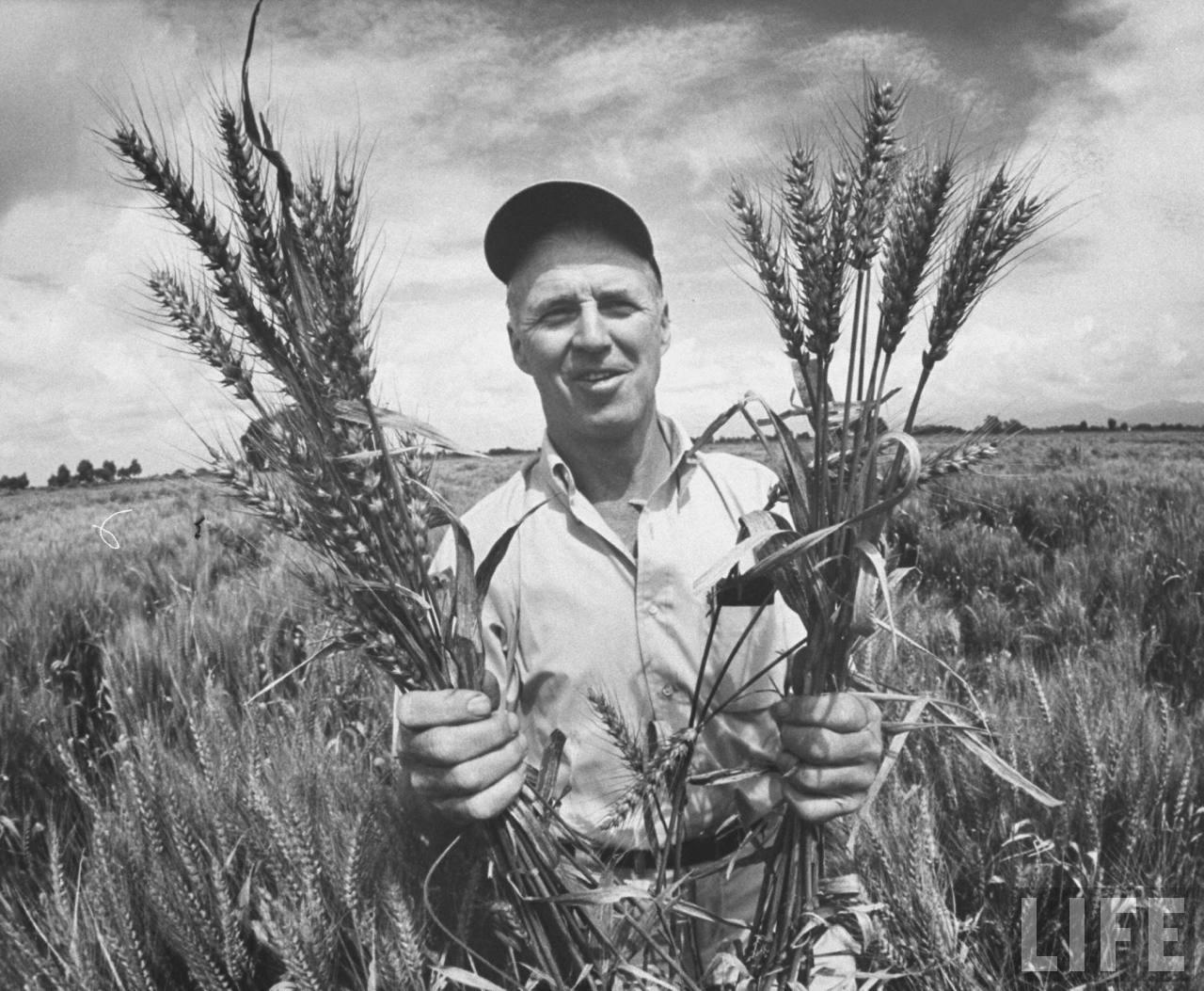 Norman Borlaug's quote #2