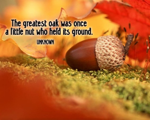 Oak quote