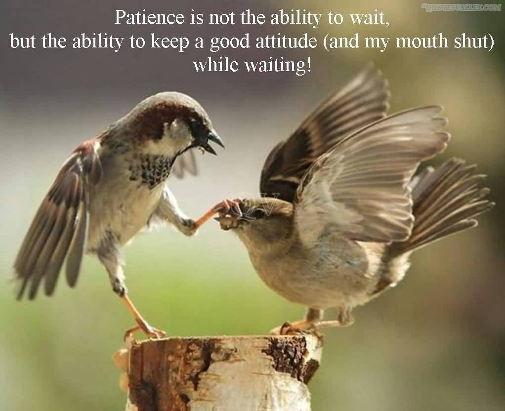 Patience quote #5