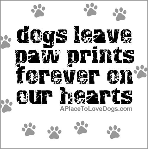 Paw quote #1