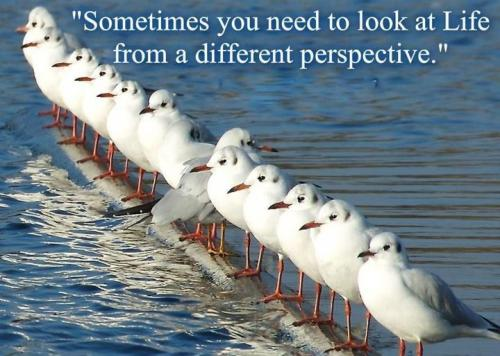 Perspectives quote #1