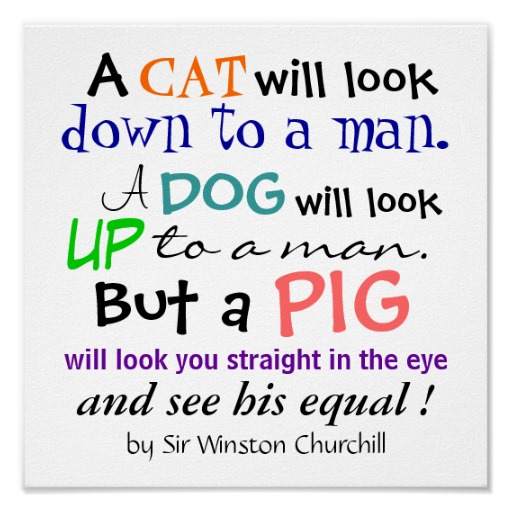 Pig quote #4