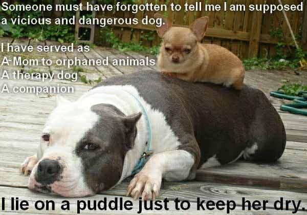 Pitbull's quote #7