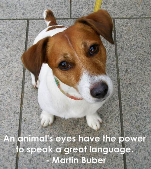 Puppies quote #2