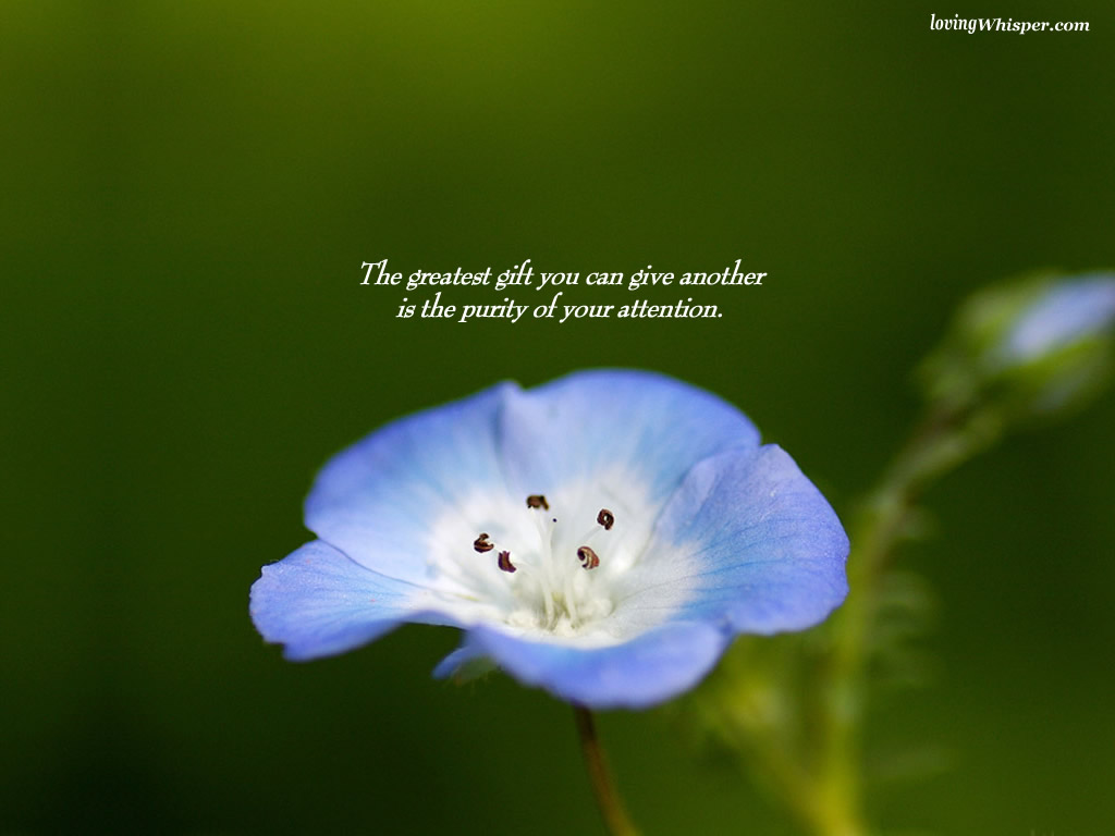 Purity quote #3