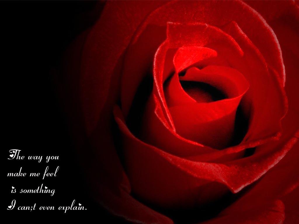 Rose quote #5