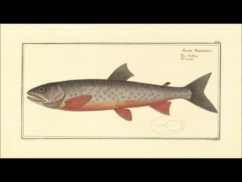Salmon quote