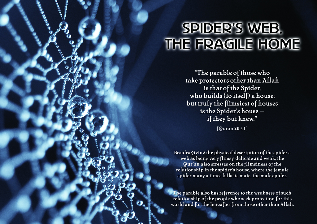 Spiders quote #1