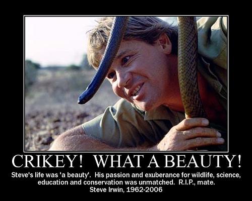 Steve Irwin's quote #4
