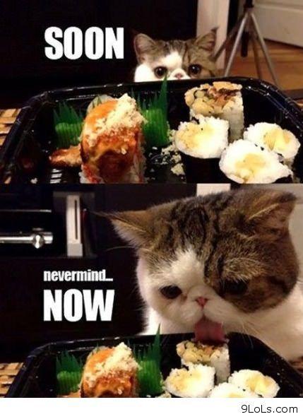 Sushi quote #2
