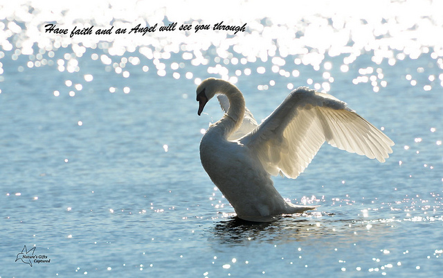 Swan quote #2