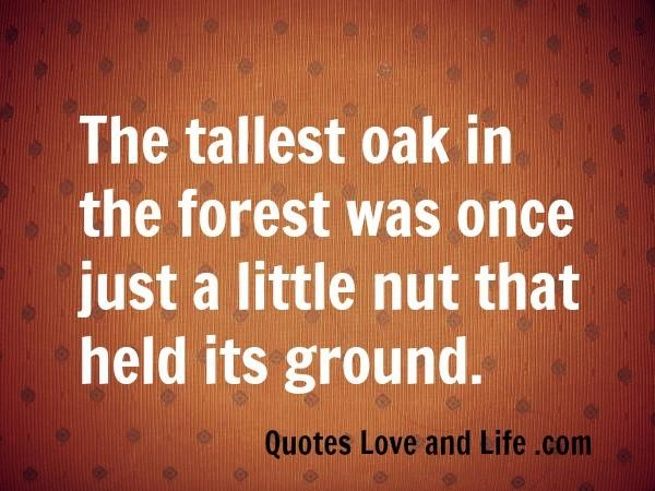 Tallest quote #2