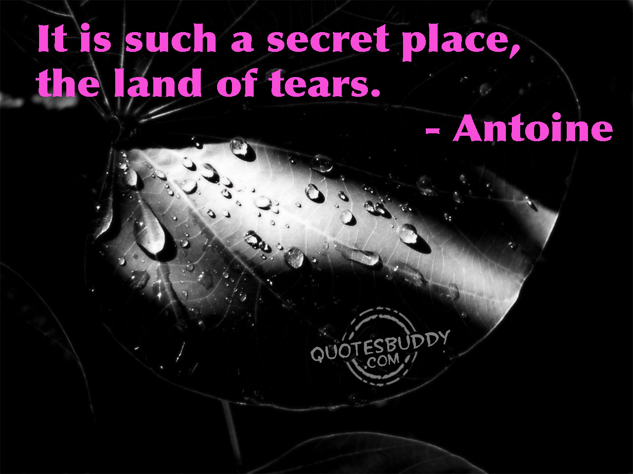 Tears quote #5