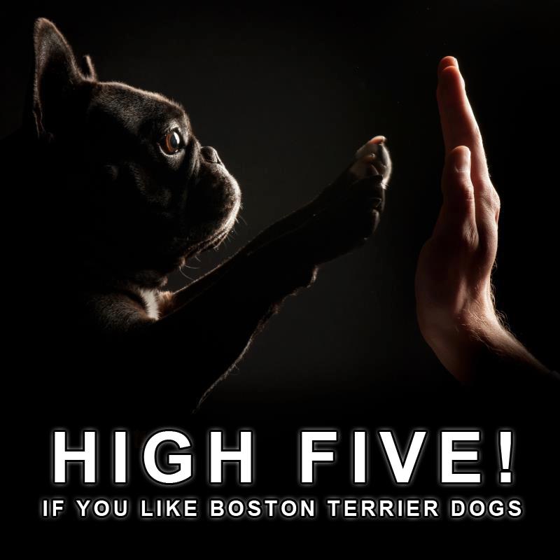 Terrier quote #2