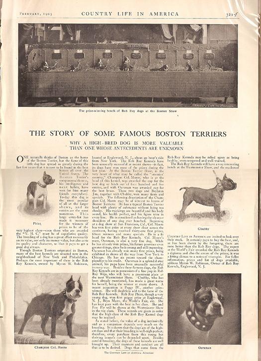 Terrier quote #1