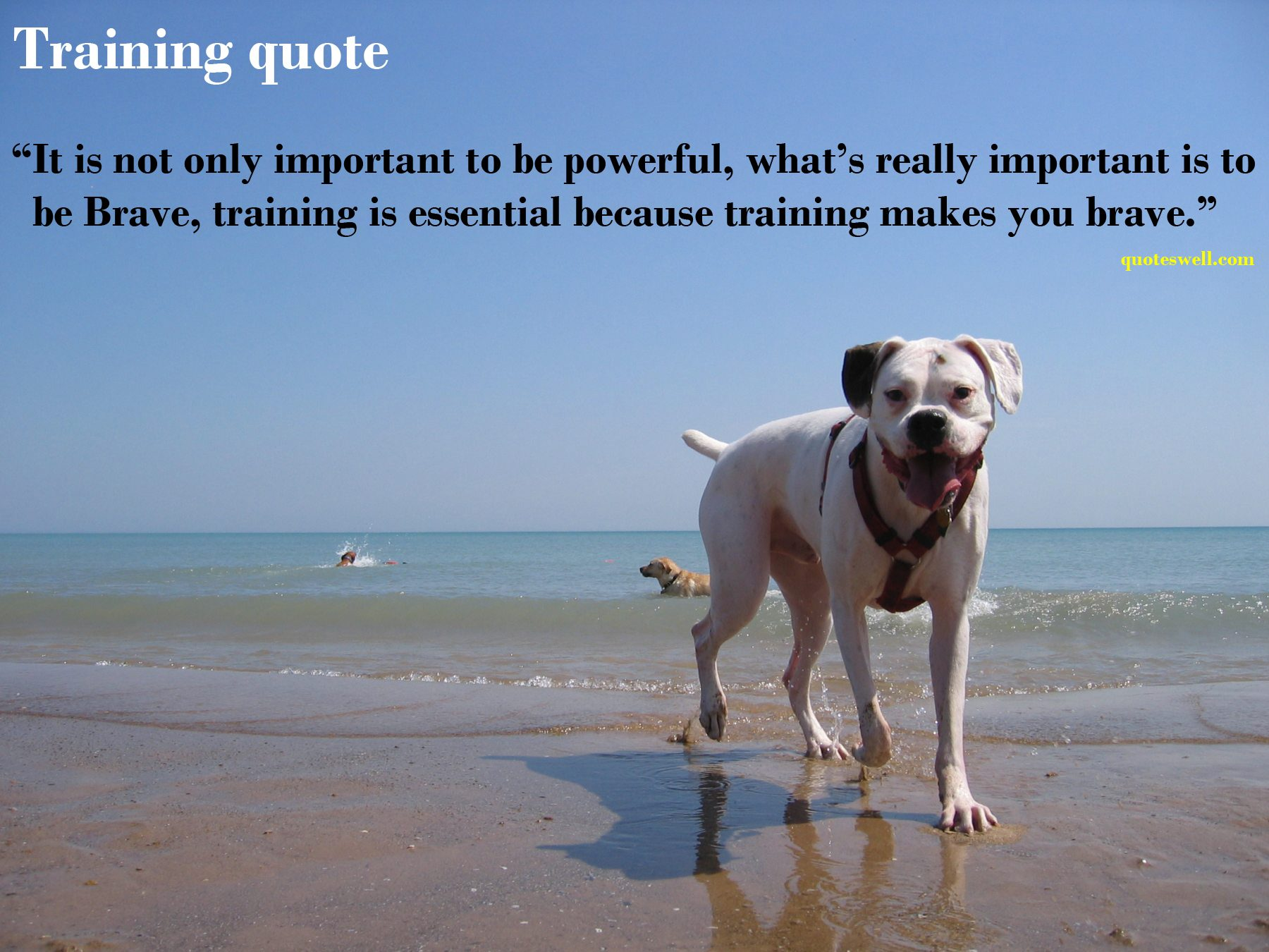 Training quote #3