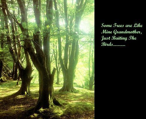 Tree quote #6