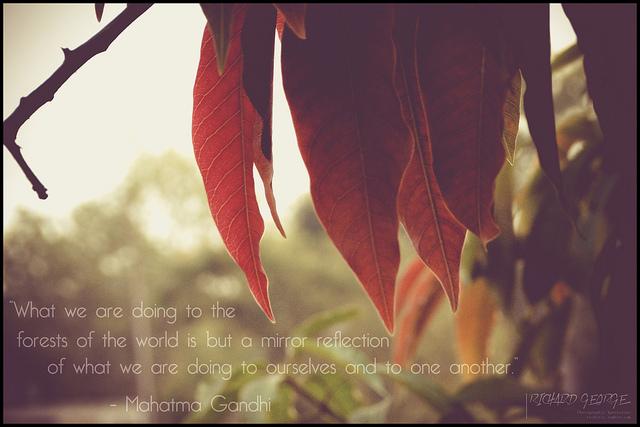 Trees quote #1
