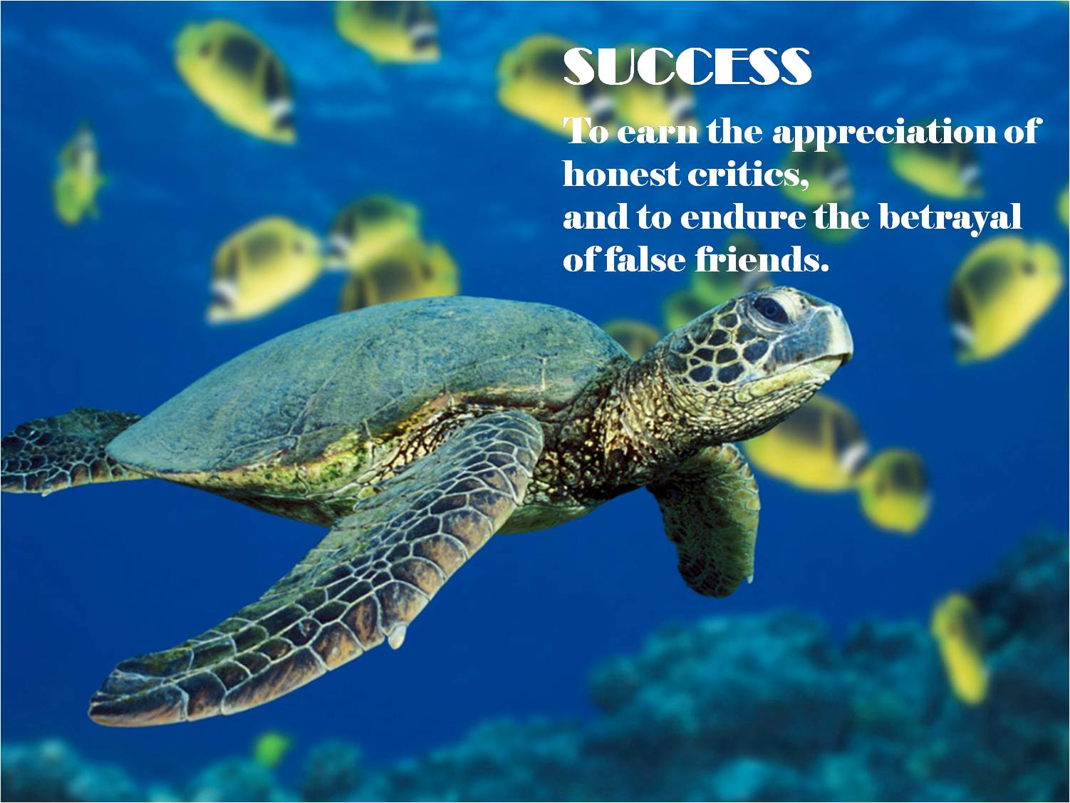 Turtle quote #2