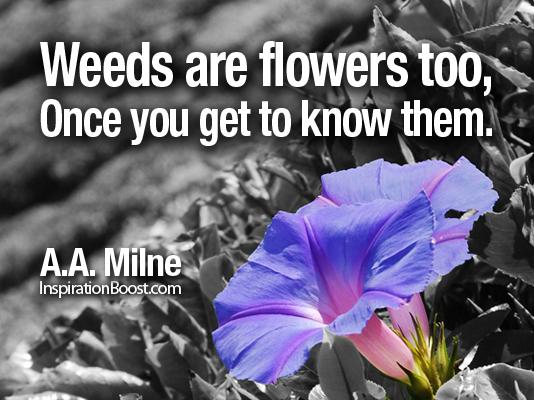 Weeds quote #1