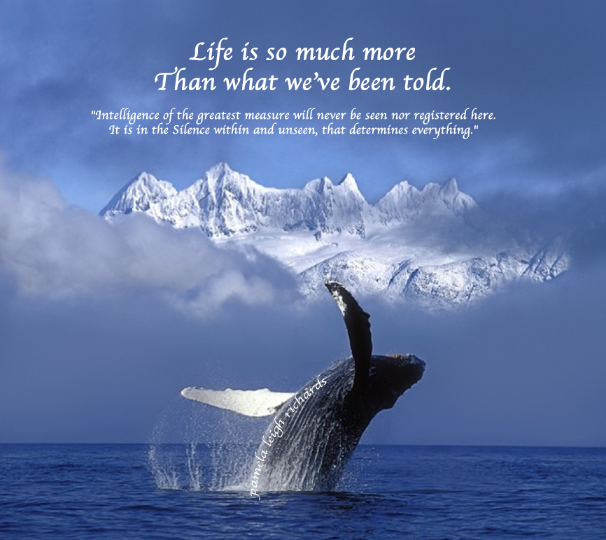 Whales quote #1