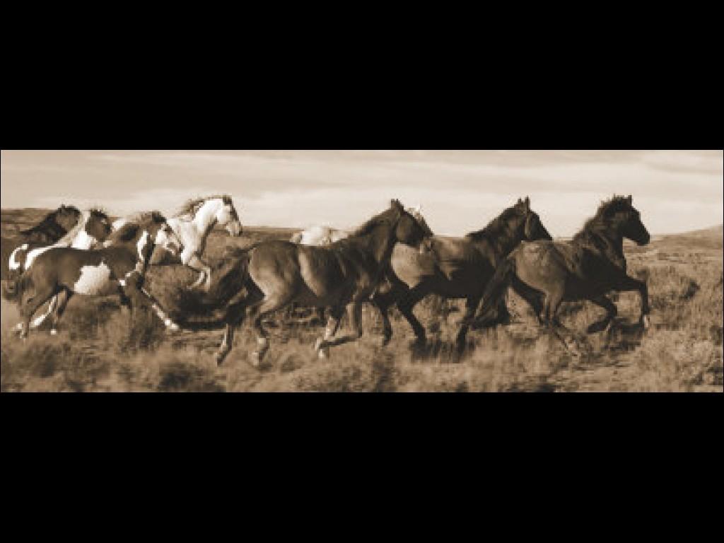 Wild Horses quote #2