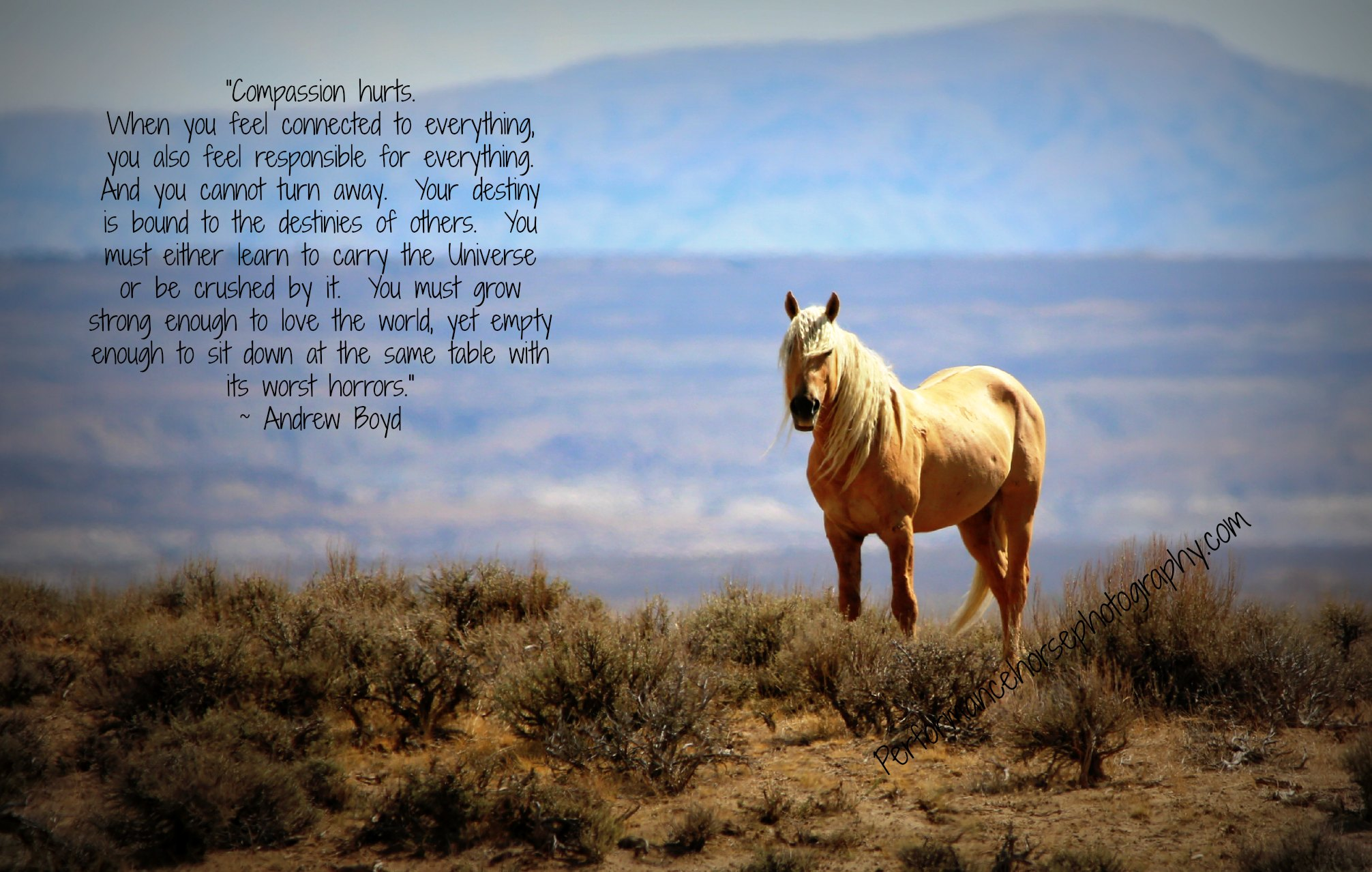 Famous quotes about \'Wild Horses\' - Sualci Quotes 2019