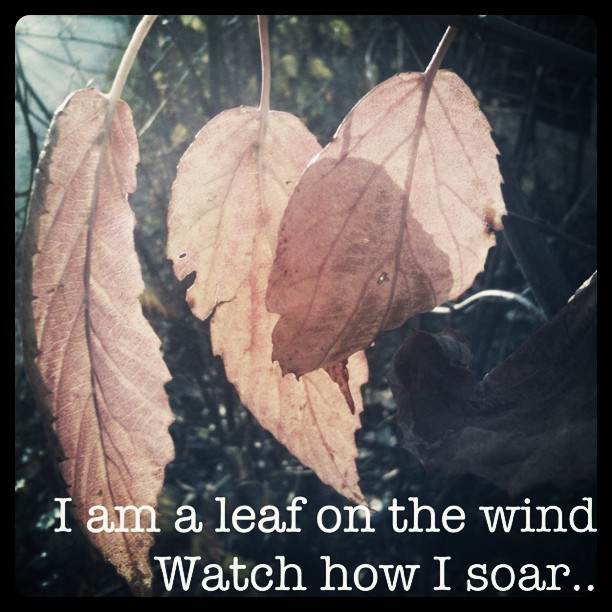 Wind quote #1