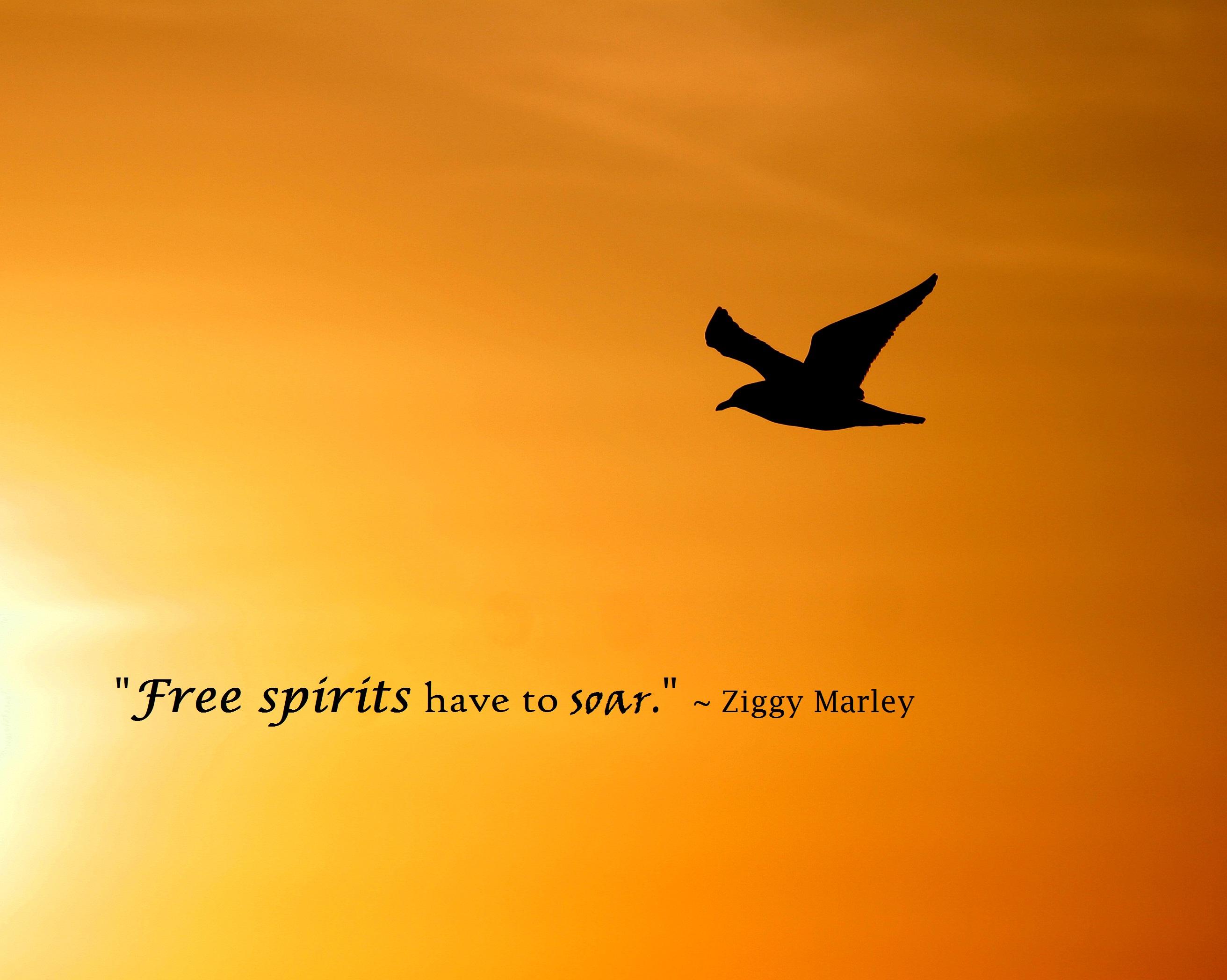 Ziggy Marley's quote #6
