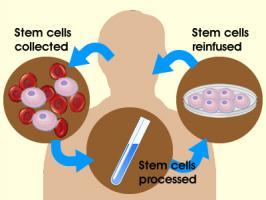 Adult Stem Cells quote #2