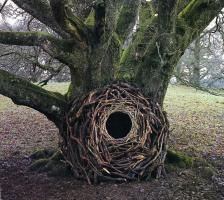 Andy Goldsworthy profile photo