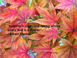 Autumn quote #5