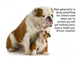 Bulldog quote #1