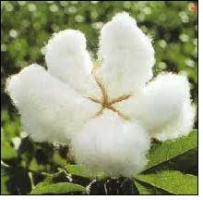 Cotton quote #4