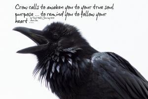 Crow quote #1