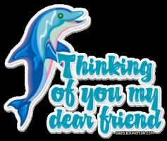 Dolphin quote #1