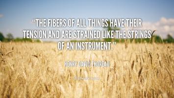 Fibers quote #2