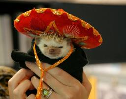 Hedgehog quote #1