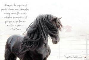 Horseback quote