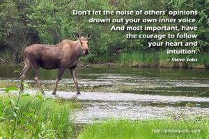 Moose quote #2